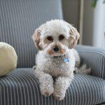 Organize Your Pet Supplies!