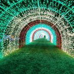 Best Holiday Lights To See in North Carolina